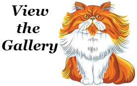 Before and After Cat Gallery